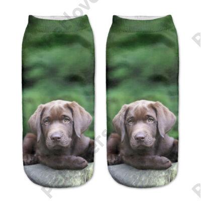Labradoros zokni