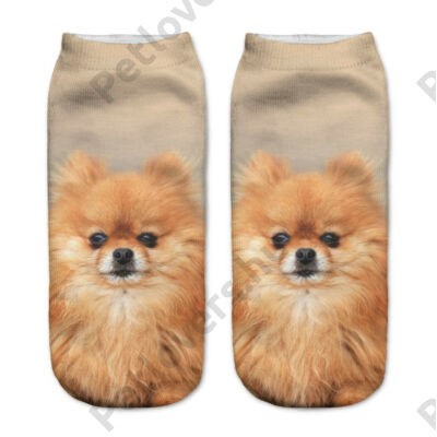 Spicc zokni