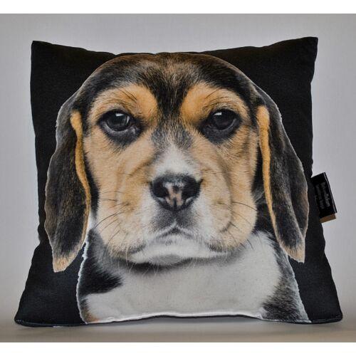Beagle mintás párna