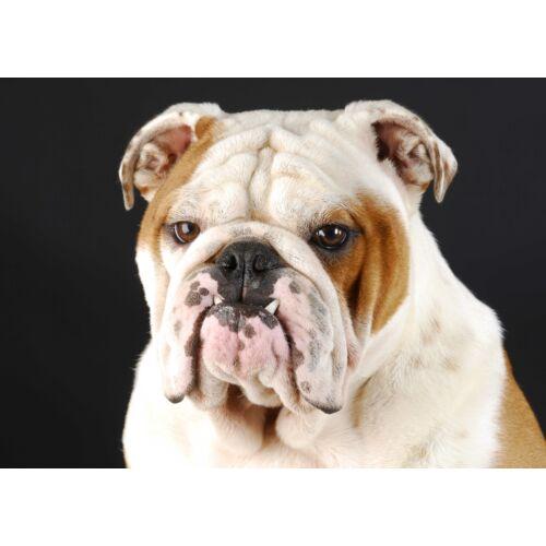Angol Bulldog mintás törölköző
