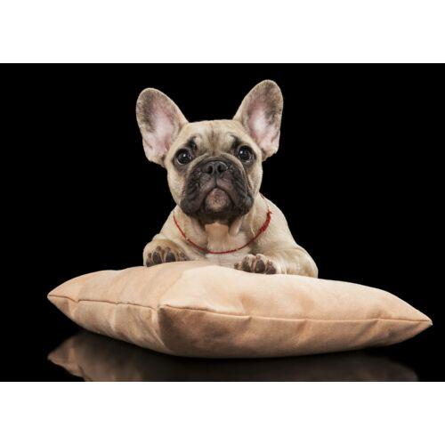 Francia Bulldog mintás törölköző 7 (70*100 cm) - bézs