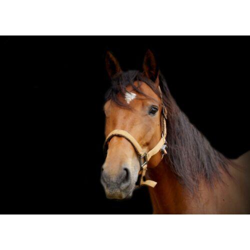 Ló mintás törölköző