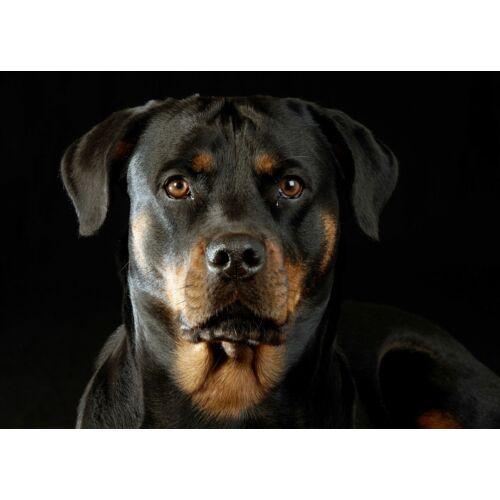 Rottweiler mintás törölköző