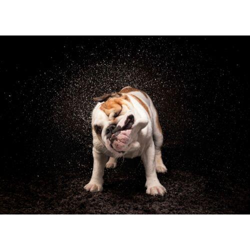 Angol Bulldog mintás törölköző 2 (70*100 cm)
