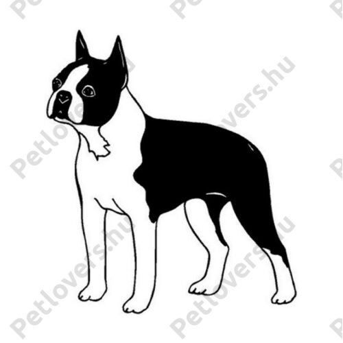 Boston Terrier matrica