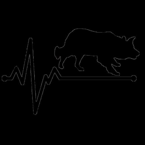 EKG Border Collie matrica