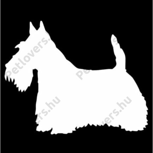 Skót Terrier matrica - fehér