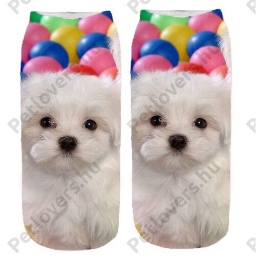Bichon mintás zokni - labda