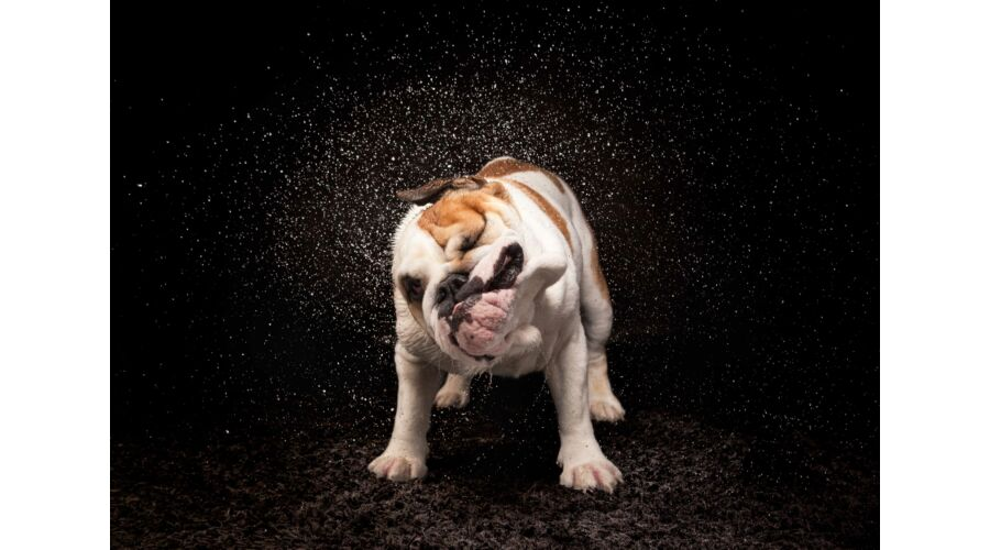 Angol Bulldog mintás törölköző 2 (50 70 cm) - Törölköző - Egyedi ... fb7b2e7e3f